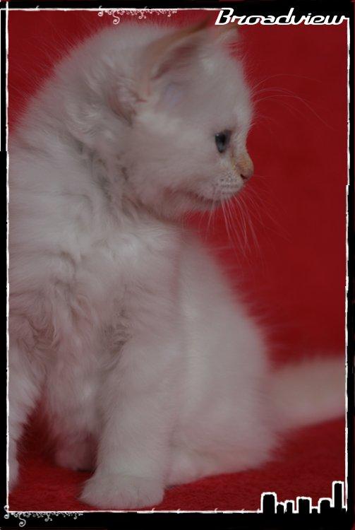 Les bébés de Foxy et Pepper - Page 2 2012_07_27_grace3-36bf3ad